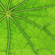 Green leaf veins - GraphicRiver Item for Sale