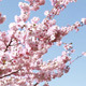 Spring Time Blooming Tree, Pack of 4 Files - VideoHive Item for Sale