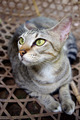 Cat Sitting in Fishing Basket - PhotoDune Item for Sale