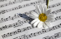 Daisy and Music Notes - PhotoDune Item for Sale