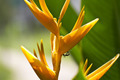 Ants on Heliconia - PhotoDune Item for Sale