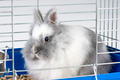 White angora bunny - PhotoDune Item for Sale