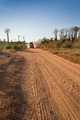 Baobabs road - PhotoDune Item for Sale