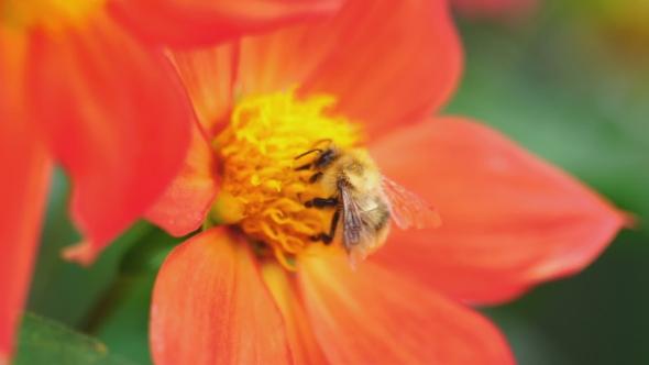 Honeydew plant flower