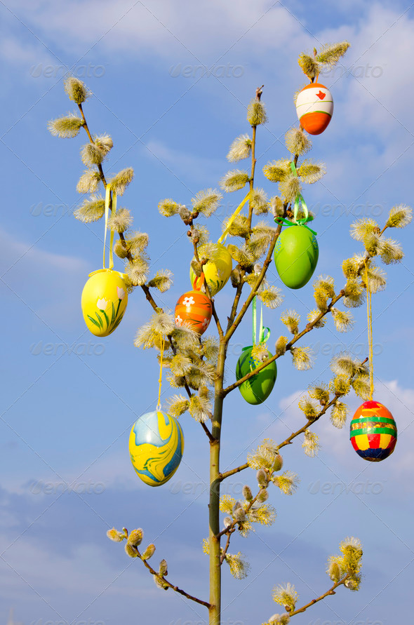 easter eggs and pussy-willow - Stock Photo - Images