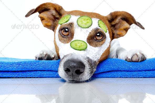 dog with a beauty mask - Stock Photo - Images