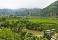Paddy Field By The Mountain - PhotoDune Item for Sale