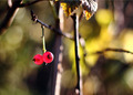 The branch with two berries of red currant - PhotoDune Item for Sale