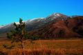 The pine in the field with mountains on a background - PhotoDune Item for Sale