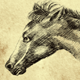 THE HORSE RUNNING - VideoHive Item for Sale