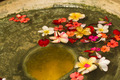Flower Petals in Water Bowl - PhotoDune Item for Sale