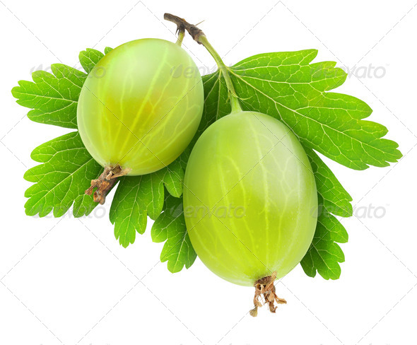 Gooseberry - Stock Photo - Images