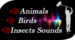 Animals Birds & Insects Sound Effects Collection