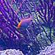 Aquarium World 2