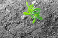 Green plant growing on dry soil - PhotoDune Item for Sale