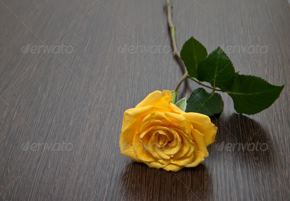 Yellow rose on a wooden table - Stock Photo - Images