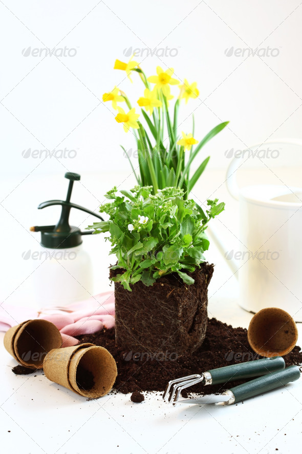 Planting - Stock Photo - Images