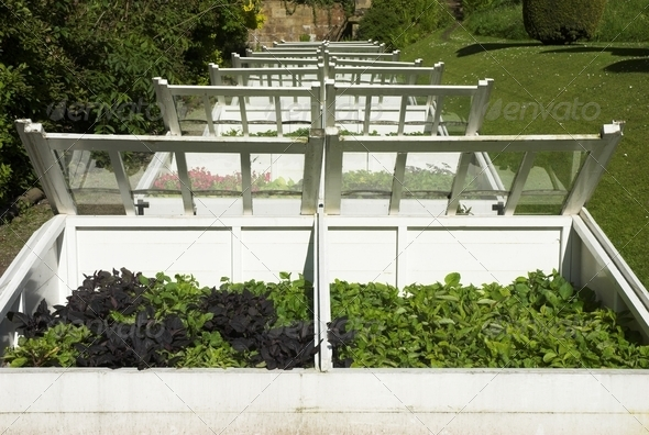 Cold Frames - Stock Photo - Images
