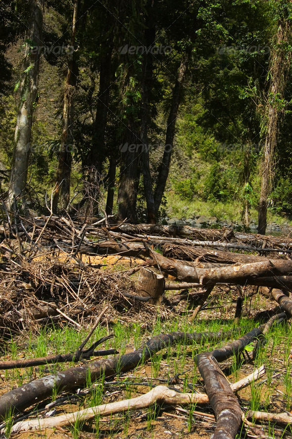 Forest Destruction - Stock Photo - Images