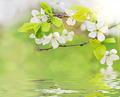spring flowers on water waves - PhotoDune Item for Sale