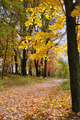 Path Covered with Maple Leaves - PhotoDune Item for Sale