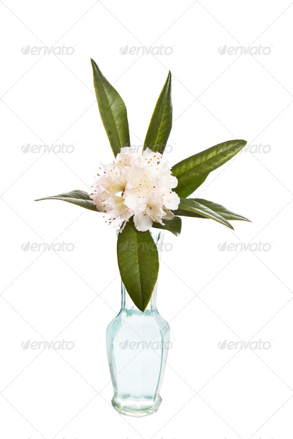 White Flowers in Glass Vase - Stock Photo - Images