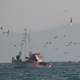 Fishing Boat With Swarm Of Seagulls - VideoHive Item for Sale