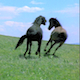 Wild Horse Chased Across Green Meadow - VideoHive Item for Sale