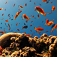 Red Fish On Coral Reef - VideoHive Item for Sale