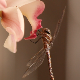 Dragonfly On Orchid Flower Close Up - VideoHive Item for Sale