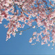 Springtime - VideoHive Item for Sale