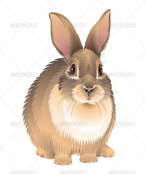 Rabbit - Animals Characters