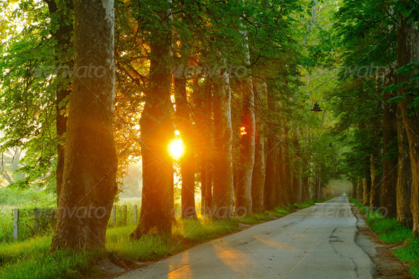 sunrise in beautiful alley - Stock Photo - Images