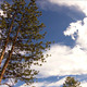 Mountain Cloud Time Lapse With Lodgepole Pine - VideoHive Item for Sale