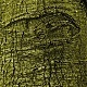 Tree Bark Textures - GraphicRiver Item for Sale