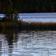 Ripples On A Lake - VideoHive Item for Sale