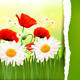 Spring Background with Red Poppies and Daisies. - GraphicRiver Item for Sale