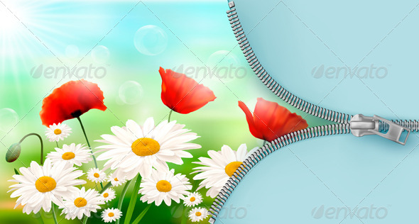 Nature Background with Summer Flowers - Flowers & Plants Nature