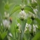 Nettle Bloom - VideoHive Item for Sale
