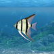 Aquarium Fish Revealer - VideoHive Item for Sale