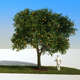 Orange tree 02 - 3DOcean Item for Sale