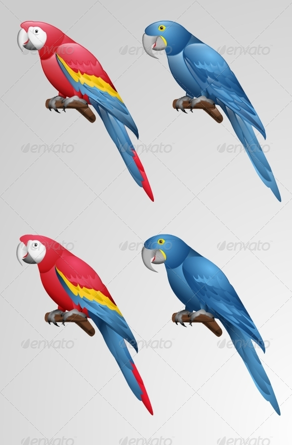 GraphicRiver Parrot Vector 2349573