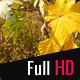 Leaves - VideoHive Item for Sale