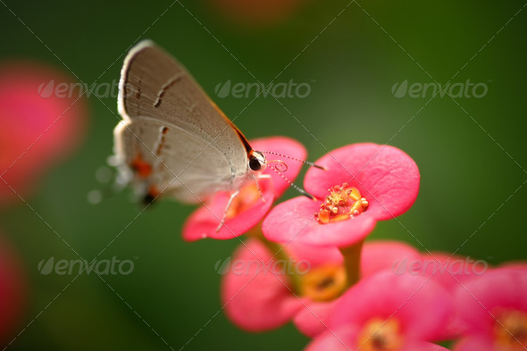 Butterfly Scouting - Stock Photo - Images