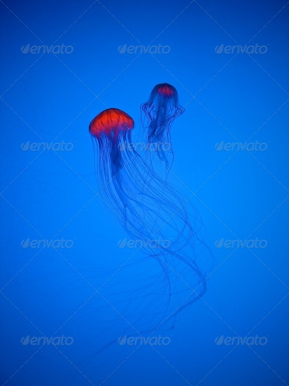 Jellyfish - Stock Photo - Images