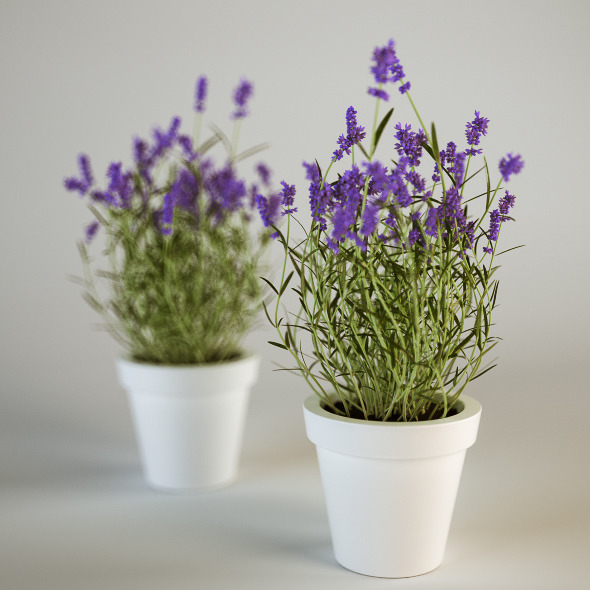 3d models lavender in a pot 3docean - Growing lavender pot ...