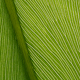 Green leaf texture 05 - GraphicRiver Item for Sale