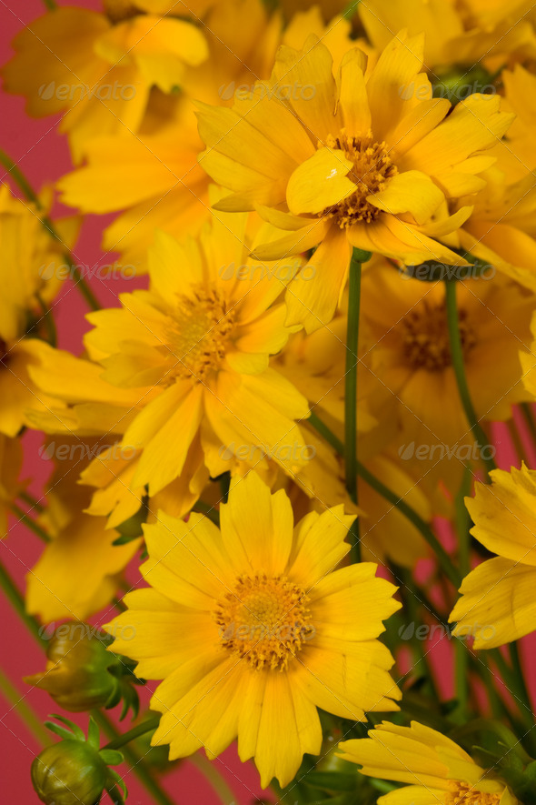 Yellow flowers - Stock Photo - Images