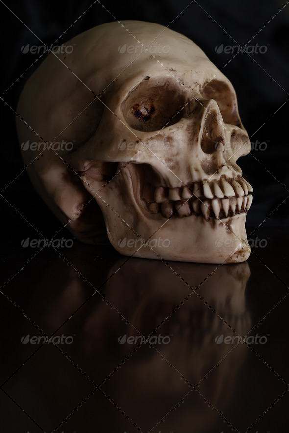 human skull - Stock Photo - Images