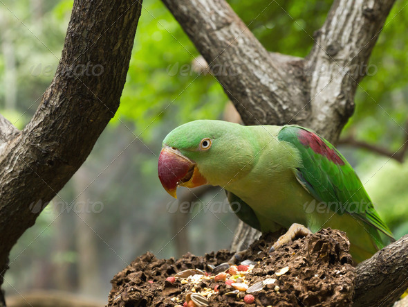 Green Parrot Bird - Stock Photo - Images